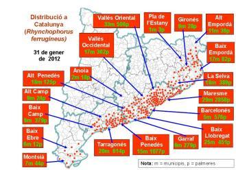 Mapa distribució Morrut