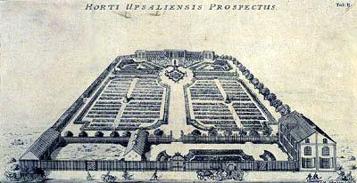 El Hortus Upsaliensis. Jardí botànic de la universitat d'Upsala