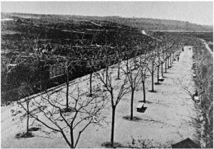 1904 Passeig Nou