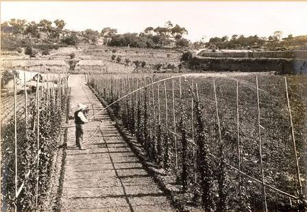 19160714Jardineria. Regant viver de rosers1. Construcció Montjuïc