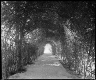 1922 Túnel amb enfiladisses als jardin de la casa Albó. Ignasi Canals i Tarrats. AFCEC